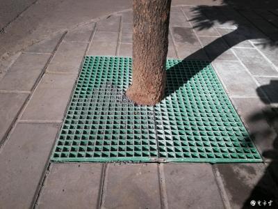 芒市行道树下的绿色网格起什么作用?