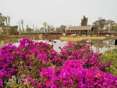 假期好去处,芒市首家湿地公园免费开放!