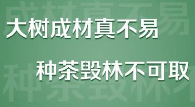 云南启动严厉打击非法侵占林地种茶毁林等破坏森林资源违法违规专项整治工作