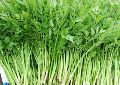 【傣语音频】预警通告!使用野菜需谨慎!