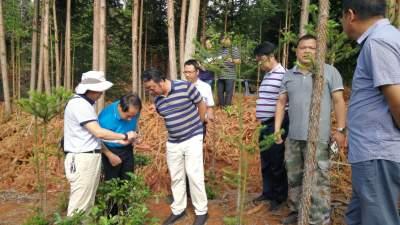 5个省级工作组现地核查16646个 疑似非法侵占林地问题图斑