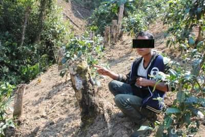 云南通报一批破坏森林资源违法违规问题典型案例