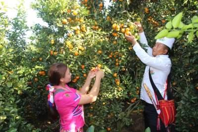 一起去三台山乡龙先瓦摘砂糖橘、品景颇美食……