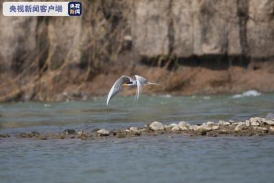 """【COP15】人工""""护巢""""模式,开启!"""