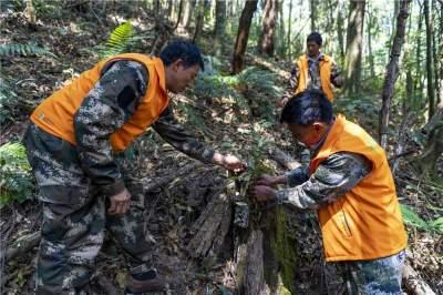 """守护""""世界物种基因库""""——云南高黎贡山生物多样性保护记事"""