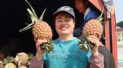 """菠萝远销全国各地,轩岗棒丙村的这个""""咩叭""""好榜样!"""