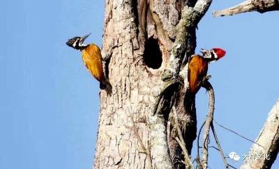他们是活在山里的鸟,我们是活在城里的鸟;生命在迁徙中结伴而行。云南十大好书《犀鸟启示录》作者、著名作家张庆国接受大样文化访谈实录
