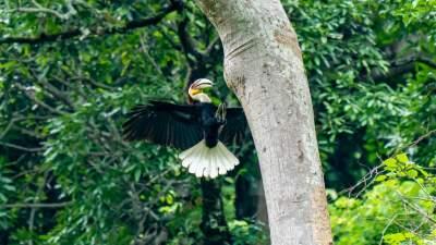 """因鸟致富 维护鸟类生态栖息地——探访西南丝绸之路上的""""石梯经验"""""""