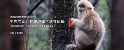 """""""多样世界,生生不息""""相约COP15系列宣传活动启动"""