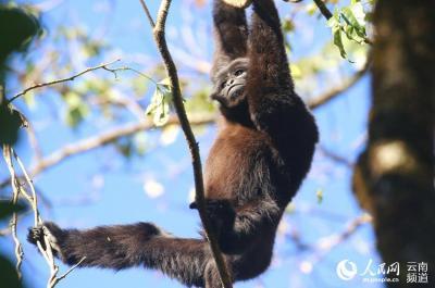 """""""愿千山长青 猿声长鸣""""——他们与自然和谐共生"""