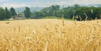 丰收季里看农家 彩云之南秋如画