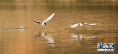 """珍鸟重现 看德宏州生物多样性保护的""""根叶""""与""""芳华"""""""