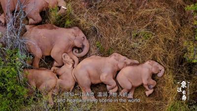 """COP15大会开幕式播映短片《""""象""""往云南》"""