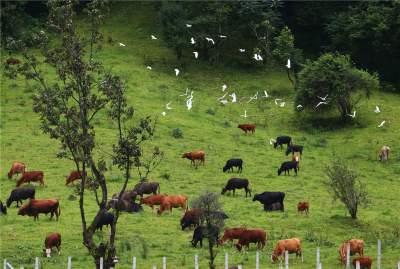 明光镇:全力打造生态肉牛养殖,奏响绿色健康产业振兴曲