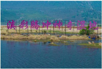 云南信息报:腾冲北海湿地保护成果显著,生物多样性恢复较好,吸引大批生态摄影师前来拍摄