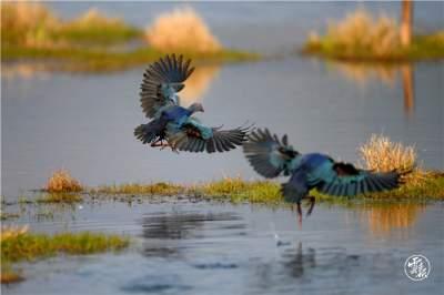 云报客户端:观鸟日记——记腾冲生物多样性保护成效