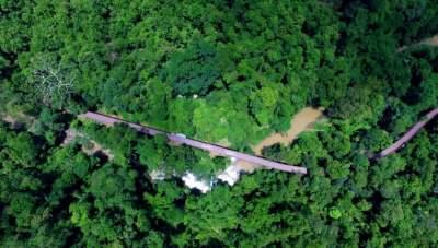 【行动】云南启动打击毁林专项行动!全面清查2013年以来毁林问题