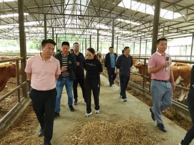 市人大市政协联合对肉牛产业发展情况进行调研
