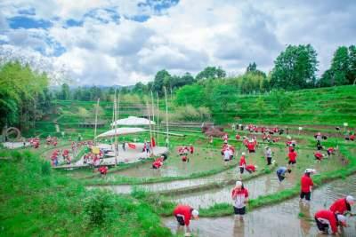 北海中学初一学生到玛御谷农坊稻田体验插秧劳动