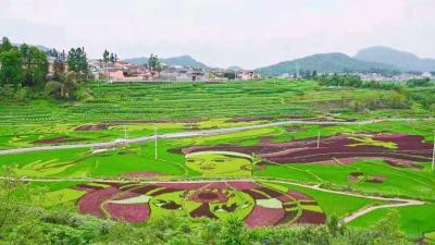 司莫拉网红稻田画是怎么绘成的