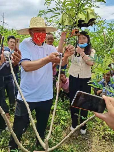 腾冲市开展花椒种植技术培训