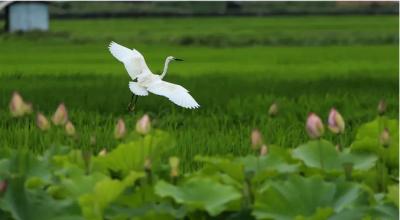 云南发布:这里是鸟的天堂!