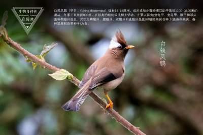 生物多样性之大美高黎贡(30)