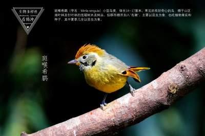 生物多样性之大美高黎贡(32)