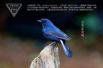 生物多样性之大美高黎贡(31)