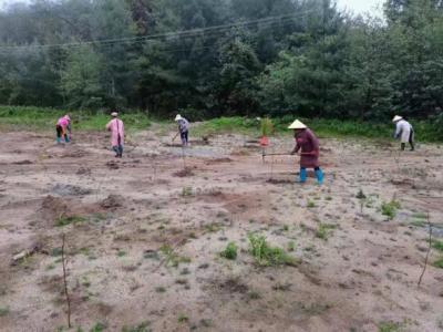 马站乡完成2021年夏季造林工作任务