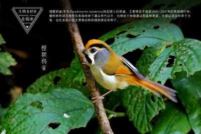 生物多样性之大美高黎贡(33)