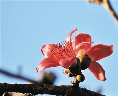 一树红花齐闹春 引来鸟雀枝头跃