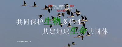 生物多样性 |【NO.141】红河约您一起迎COP15盛会 每天一物开启红河生物多样性之门