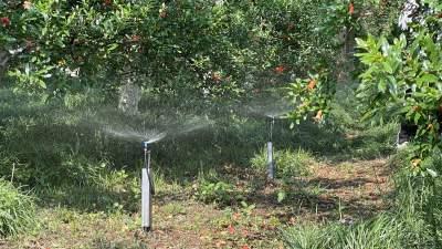 """蒙自:提升水果品质助力打造世界一流""""绿色食品牌"""""""