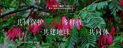 生物多样性 |【NO.173】红河约您一起迎COP15盛会 每天一物开启红河生物多样性之门