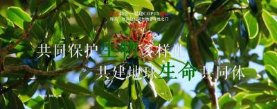 COP15【NO.206】每天一物开启红河生物多样性之门
