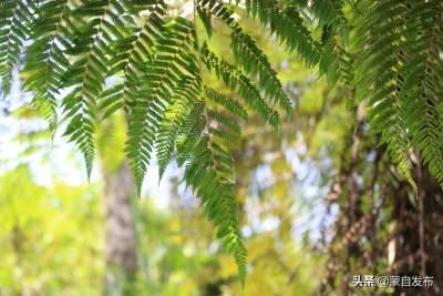 水田乡:聚焦生物多样性保护 建设万物和谐美丽家园