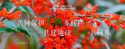 COP15【NO.191】每天一物开启红河生物多样性之门