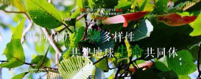 生物多样性  【NO.197】红河约您一起迎COP15盛会 每天一物开启红河生物多样性之门