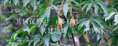 COP15【NO.198】每天一物开启红河生物多样性之门