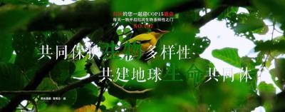 生物多样性  【NO.187】红河约您一起迎COP15盛会 每天一物开启红河生物多样性之门