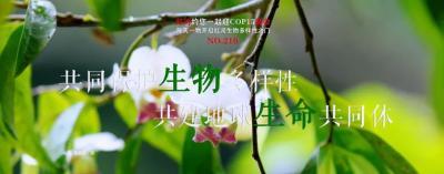 COP15【NO.210】每天一物开启红河生物多样性之门