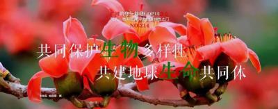 【NO.214】每天一物开启红河生物多样性之门