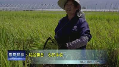 稻谷飘香 农民丰收