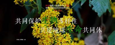 【NO.222】每天一物开启红河生物多样性之门