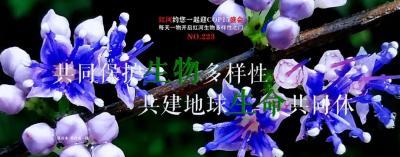 【NO.223】每天一物开启红河生物多样性之门