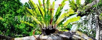 【NO.216】每天一物开启红河生物多样性之门