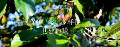【NO.224】每天一物开启红河生物多样性之门