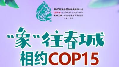 """【""""象""""往春城 相约COP15】COP15跟你没关系?""""萌萌象""""给你划重点"""