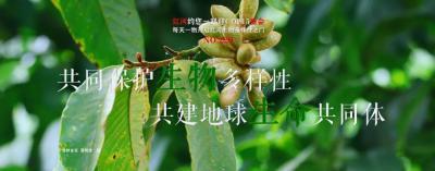 【NO.220】每天一物开启红河生物多样性之门